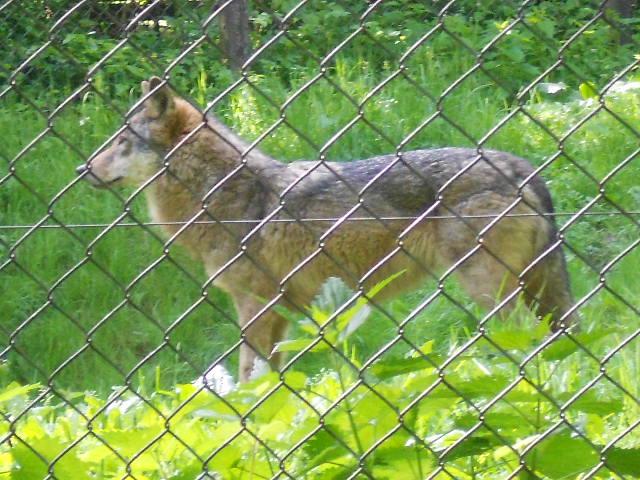 Wolf Olderdissen
